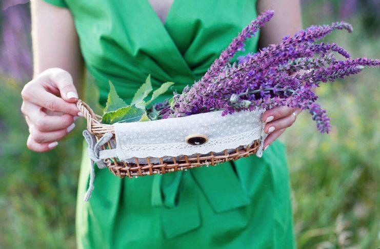 Как принимать шалфей при климаксе и приливах у женщин
