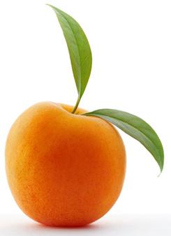 11 неделя плод можно сравнить с абрикосом