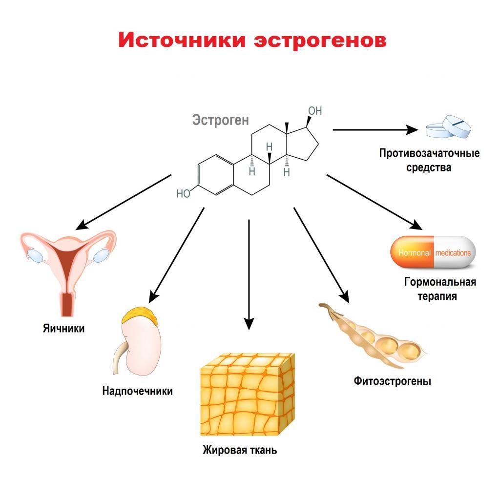 Источники эстрогенов